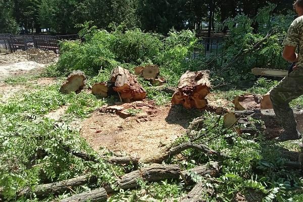 ВТаганроге всквере Петра Iв.рамках благоустройства спилят 26 деревьев